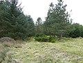 Baby trees near Hades, Holmfirth - geograph.org.uk - 747352.jpg