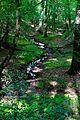 Bachlauf durch das Königsbüscher Wäldchen.jpg