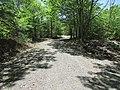 Bald Mountain Trail, Dedham, Maine image 2.jpg