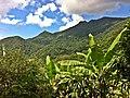 Bananeira - panoramio (1).jpg