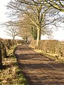 Bare Trees and Hedges But A Beautiful Morning - geograph.org.uk - 686204.jpg