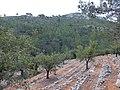 Barranco del Cao hike (26643557180).jpg
