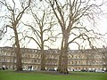 Bath - The Circus - panoramio.jpg