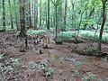 Battle Creek Cypress Swamp 25.jpg