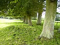 Beautiful avenue of trees near Lingmoor Barn - geograph.org.uk - 226843.jpg