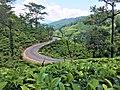 Beauty of tea plantations in Sri Lanka.jpg