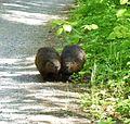 Beaver Tales9030.jpg