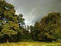 Beech Trees at Dunham Park - geograph.org.uk - 113326.jpg