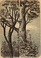 Beiträge zur Ornithologie Südafrikas. Mit besonderer Berücksichtigung der von Dr. Holub auf seinen südafrikanischen Reisen gesammelten und im Pavillon des Amateurs zu Wien ausgestellten Arten (1882) (20175709168).jpg