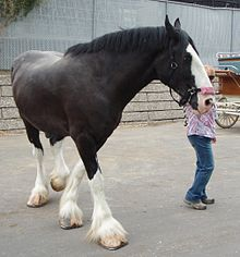 Les Robes du cheval dans CHEVAL