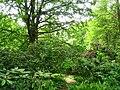 Berlin Tiergarten vista - IMG 8400.JPG