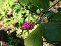 Berries4.jpg