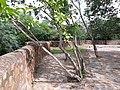 Bhuli Bhatyari Ka Mahal 14.jpg