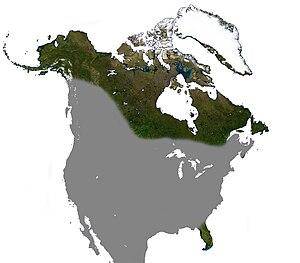 Big brown bat - Image: Big Brown Bat North America Range