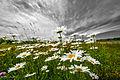 Blooms54 (9094631198).jpg