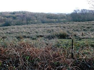 Culm Measures - Boggy moorland near Hatherleigh