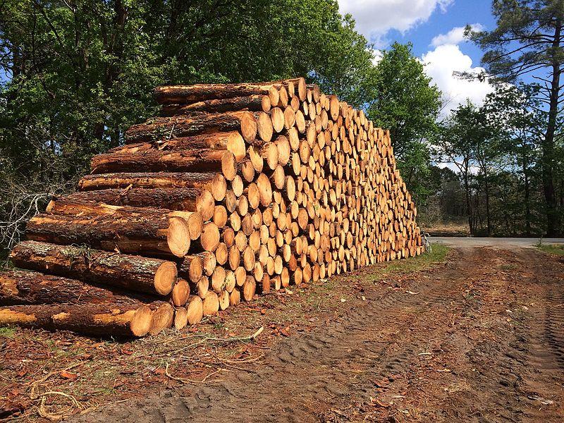 Les pins sont coupés régulièrement pour alimenter les usines à papier (Biganos, Mimizan) et les scieries locales. Une partie de plus en plus importante du bois de coupe est utilisée pour les usines à biomasse.