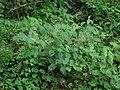 Bois de Source Noir (2891849387).jpg