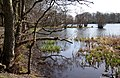 Bolam Lake - geograph.org.uk - 387861.jpg