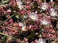 Bolsa Chica - Flora 5.jpg