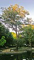 Bosque dos Namorados - panoramio (2).jpg