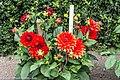 Botanic Gardens In Glasnevin (Dublin) (7951843026).jpg