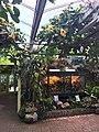 Botanische tuinen Utrecht 28.jpg