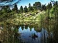 Botanischer Garten Teich.jpg
