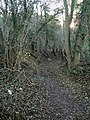 Bradenham Wood - A pathway - geograph.org.uk - 92756.jpg