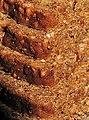 Bread HMM (36507511731).jpg