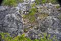 Breccia-filled dissolution pit (Sandy Point Northeast roadcut, San Salvador Island, Bahamas) 3 (16282303399).jpg