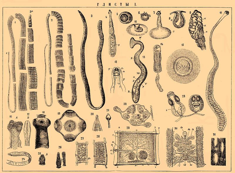 паразиты в языке человека