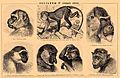 Brockhaus and Efron Encyclopedic Dictionary b42 496-4.jpg