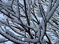 Brugg2004 snowtree.jpg