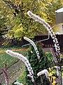 Bugbane Flower Plumes (32485203800).jpg