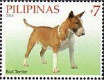 Bull-Terrier-Canis-lupus-familiaris.jpg