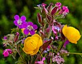 Bunch Of Flowers (259857693).jpeg