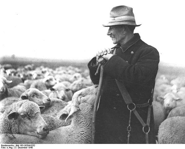 File:Bundesarchiv Bild 183-19204-0252, Schäfer mit seiner Herde ...   {Herde 29}