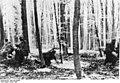 Bundesarchiv Bild 183-J28586, Ardennenoffensive.jpg
