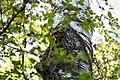 Buntspecht Dendrocopos major Nationalpark Donau-Auen Lobau Mai 2016 01.jpg