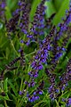 Burgundy Candles Sage Angled View PLT-FL-WD-SA-3.jpg