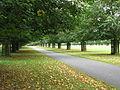 Bushy Park (3018486779).jpg