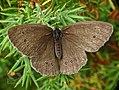 Butterfly (19206143234).jpg