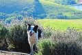Cão Sorrindo na Serra da Bocaina.jpg