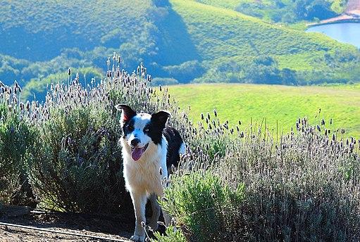 Cão Sorrindo na Serra da Bocaina