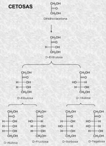 hidratos de carbono complejos definicion