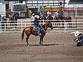 CFD Tie-down roping Ryan Jarrett -6.jpg