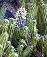 Cactus (8312164171).jpg