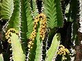 Cactus géant (détail).JPG
