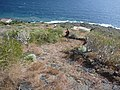 Camino de Las Playas. - panoramio.jpg